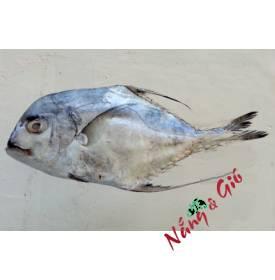 Cá bè lão|cửa hàng đặc sản phan rang tại TP.HCM