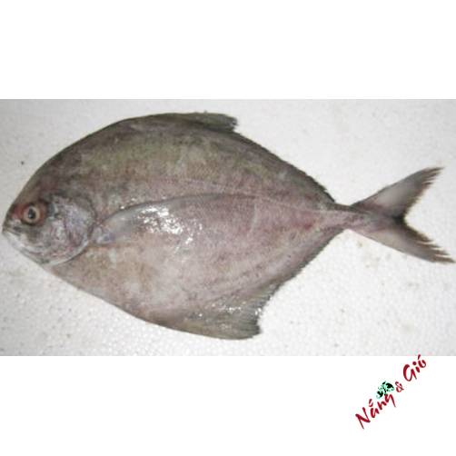 Cá Chim Đen | Cửa hàng đặc sản phan rang tại TP.HCM