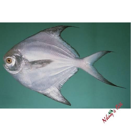 Cá Chim Trắng | Cửa hàng đặc sản phan rang tại TP.HCM