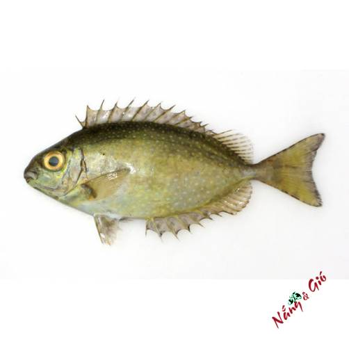 Cá Dìa Loại 1