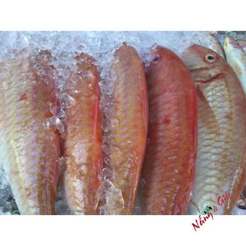 Cá Đổng