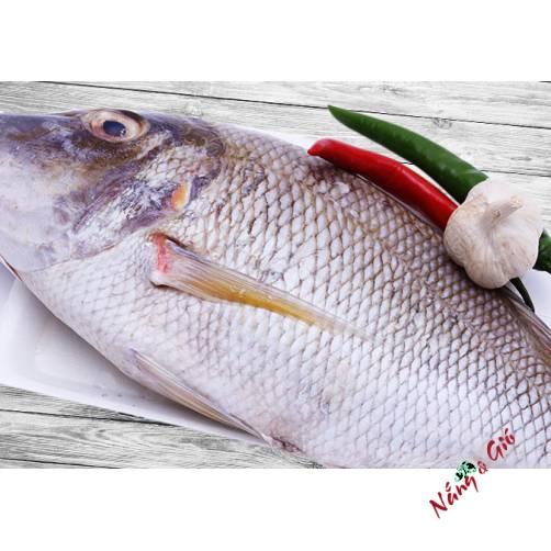 Cá Gáy |cửa hàng đặc sản phan rang tại TP.HCM