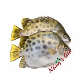 Cá Nâu |cửa hàng đặc sản phan rang tại TP.HCM