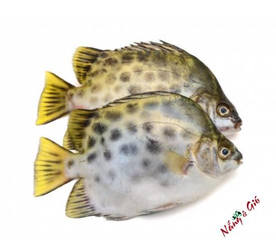 Cá Nâu