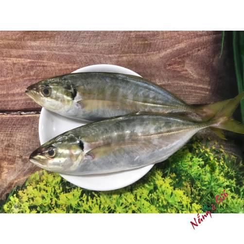 Cá Ngân