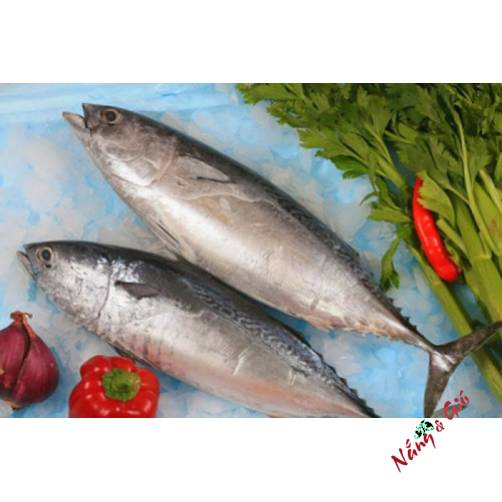 Cá Ngừ