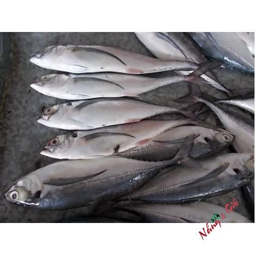 Cá Sòng