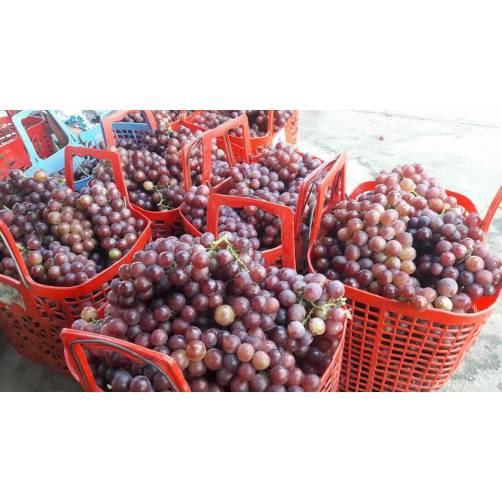 Nho Đỏ Phan Rang| Cửa hàng đặc sản phan rang tại TP.HCM
